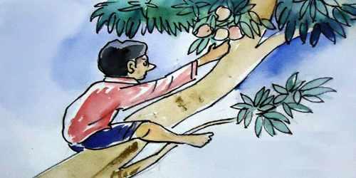 আম কুড়োতে সাবধান