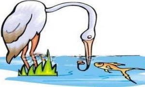 মাছ খোর মুরগির গল্প