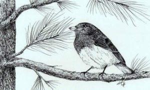 ছোট্ট রবিন পাখি – আদিবাসী লোককথা