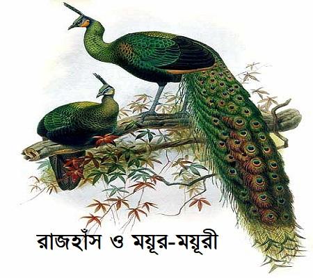 রাজহাঁস ও ময়ূর-ময়ূরী