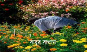 বাবুর বাগান