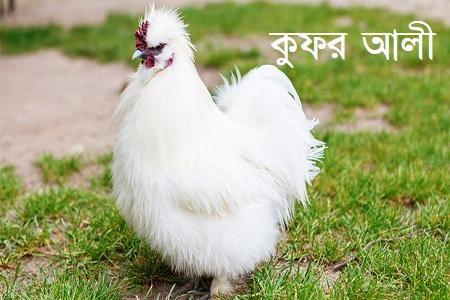কুফর আলী