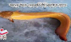 কালো আর সোনালি শিংমাছের ব্যাগ