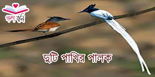 দুটি পাখির পালক